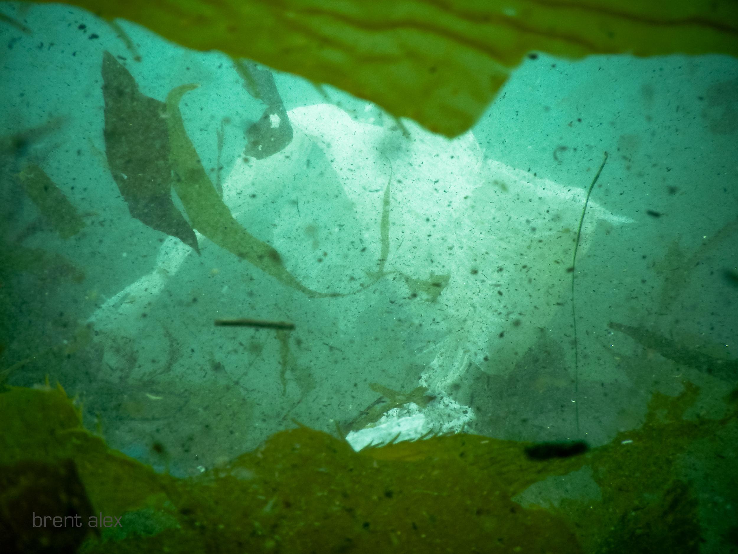 ghost+kelp.jpg