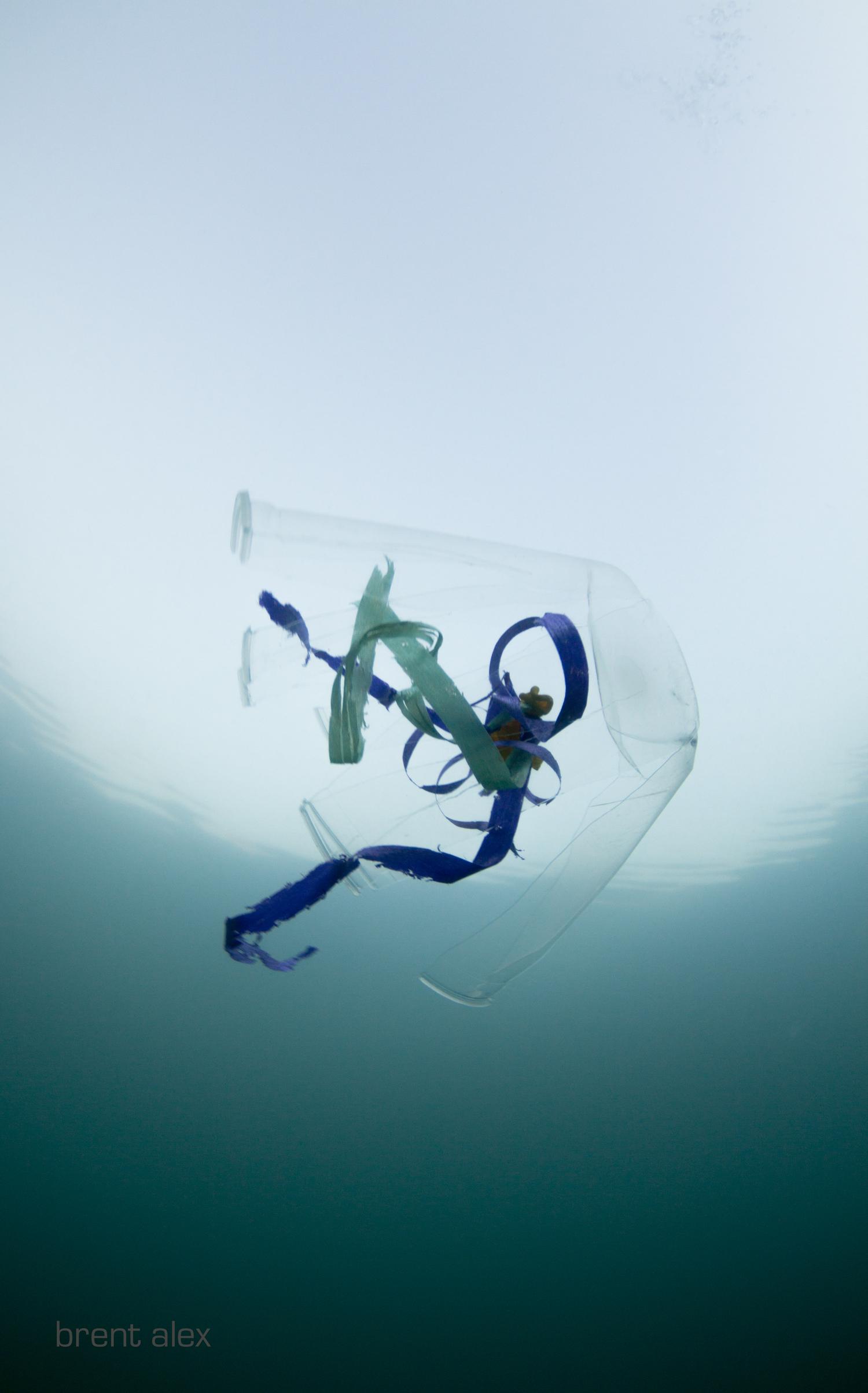 plasti+balloon+jelly_.jpg