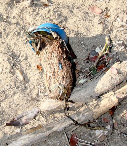 Komodo dragon bolus with plastic pieces inside. Photo by Pam Longobardi