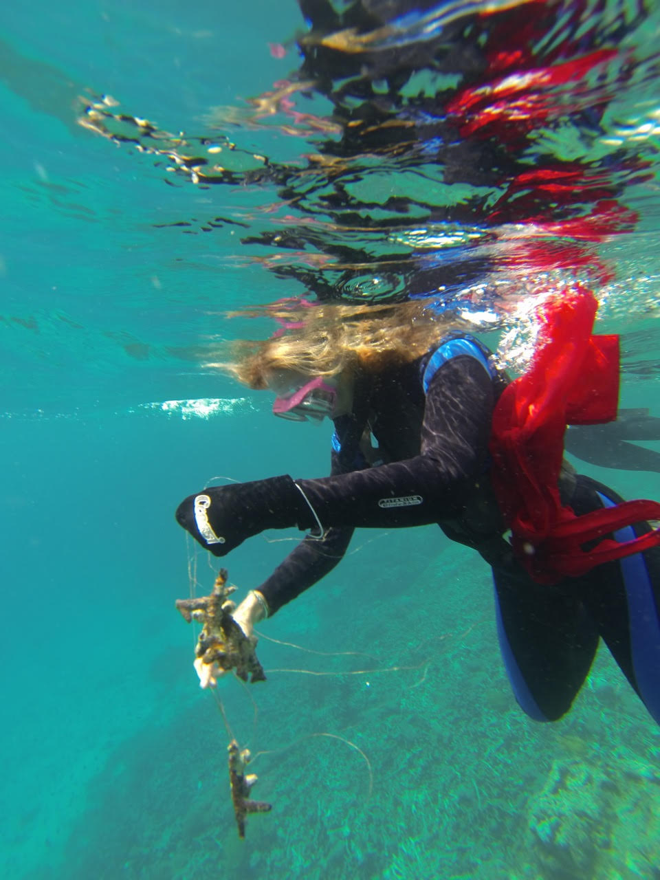 Removing fishing line from coral. Photo by Amir Using