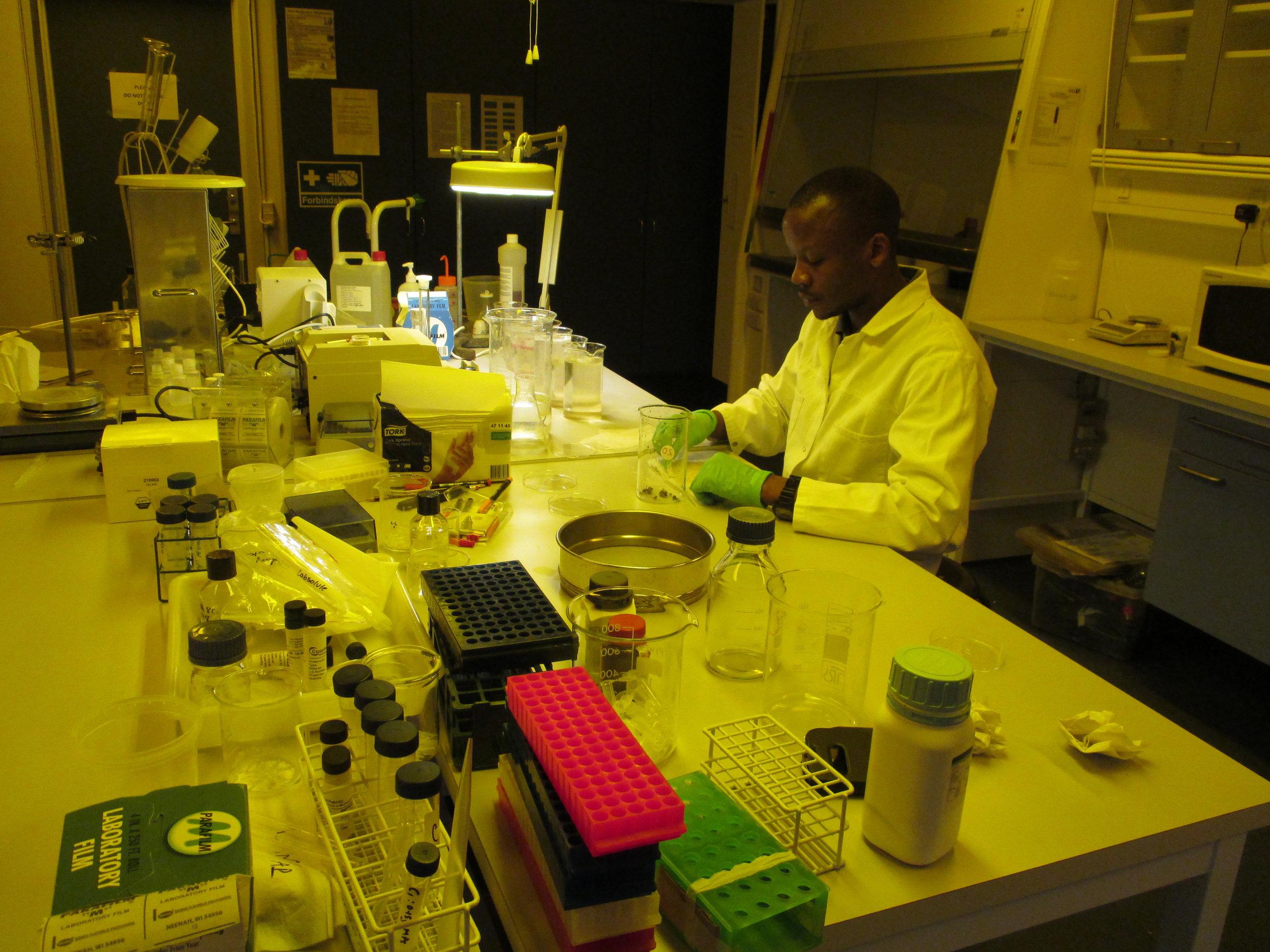 Bahati Mayoma looks for microplastics in the GI tracts of the fish. 20 percent of fish tested had microsplastics present.
