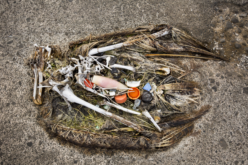 A dead albatross with plastic caps in its stomach. Photo by Tandem Stills + Motion.
