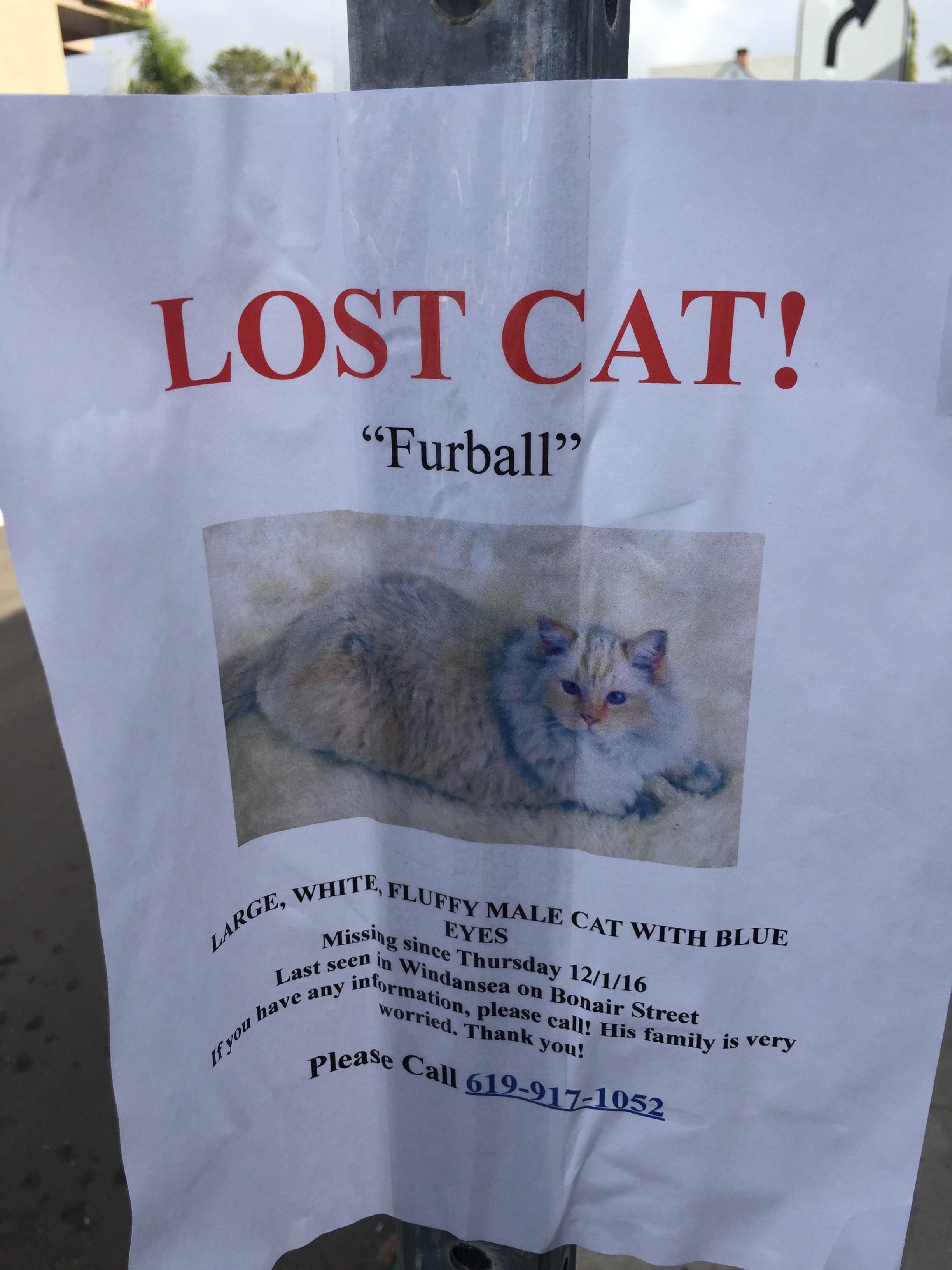 Missing Furball