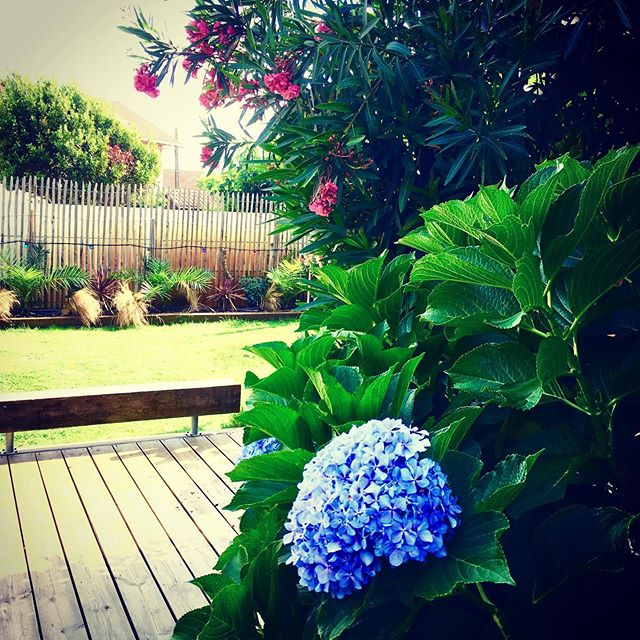 The beach house garden is in full high season bloom ready for the annual summer retreat 12 to 16 Aug - last 2 spots remaining.  www.yogabeachhouse.com  #yogabeachhouse #connectionwithnature #gardenhaven #beachhouse #yogaretreat #retreatlodge #retreatcentre #retreatvenue #yogaretreatfrance #bookyogaretreats #wetravel