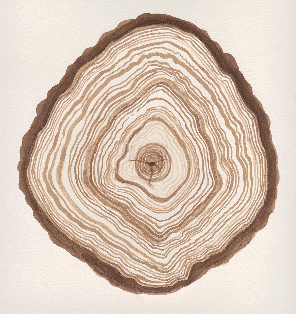 tree_ring_angela_faz_.png