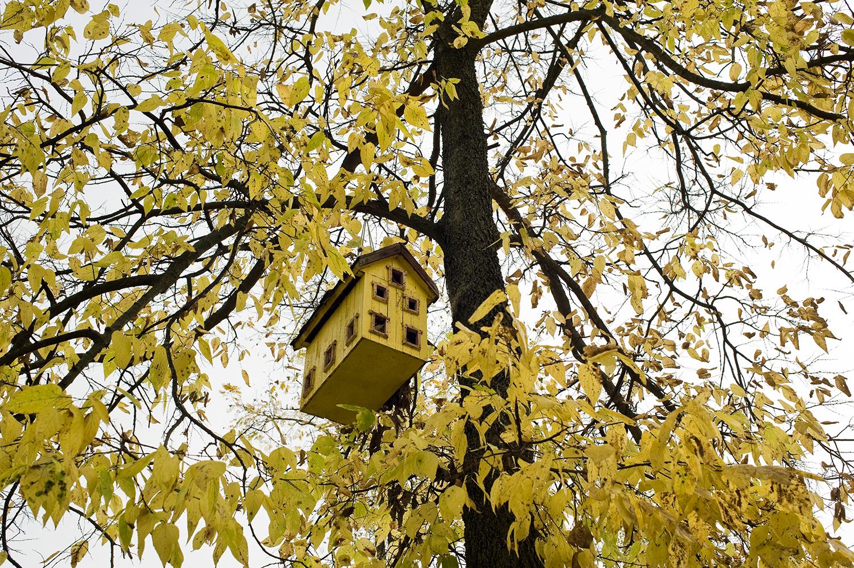 OH_Yellow-bird-house-3.jpg