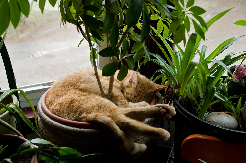 ME_CatSleeping_2012.jpg