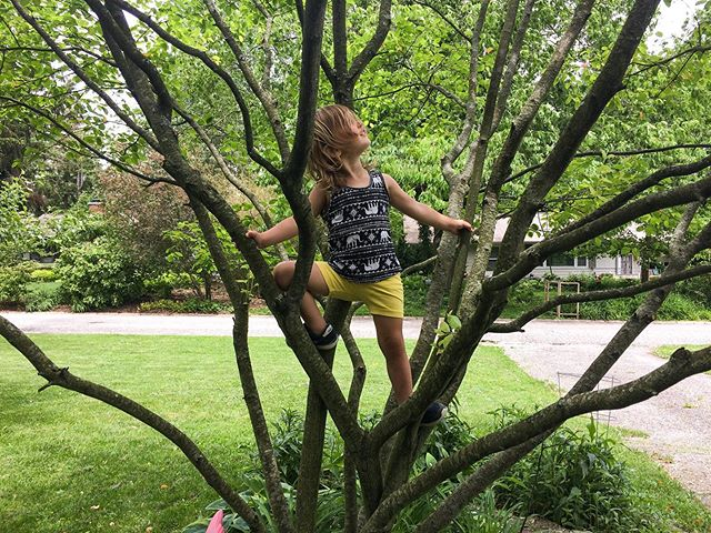 """Can I climb that tree?"" #adventureswithflorence"