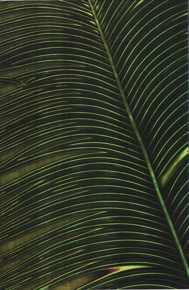 3Fan-Leaf_651.jpg