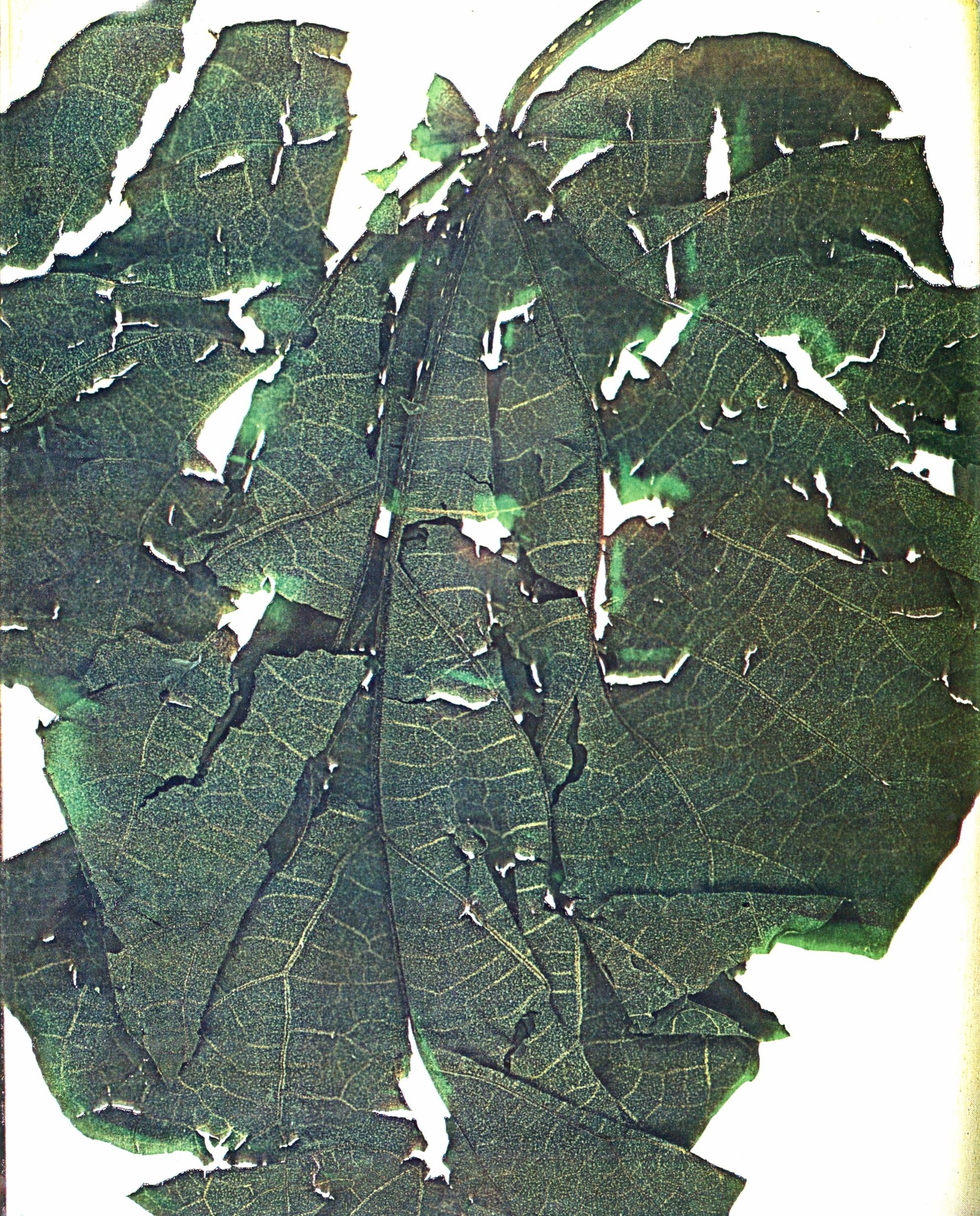 15. Leaf copy.jpg