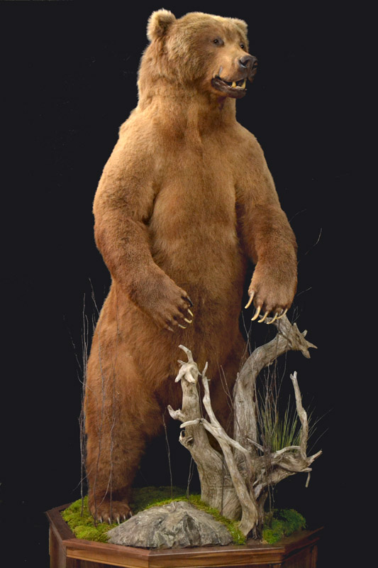 life size brown bear