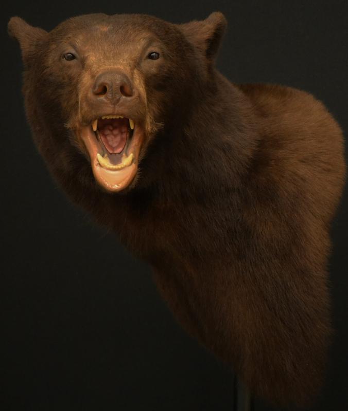 bear wall pedas