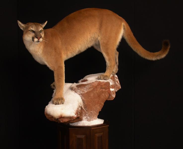 female lion pedestal 1.jpg