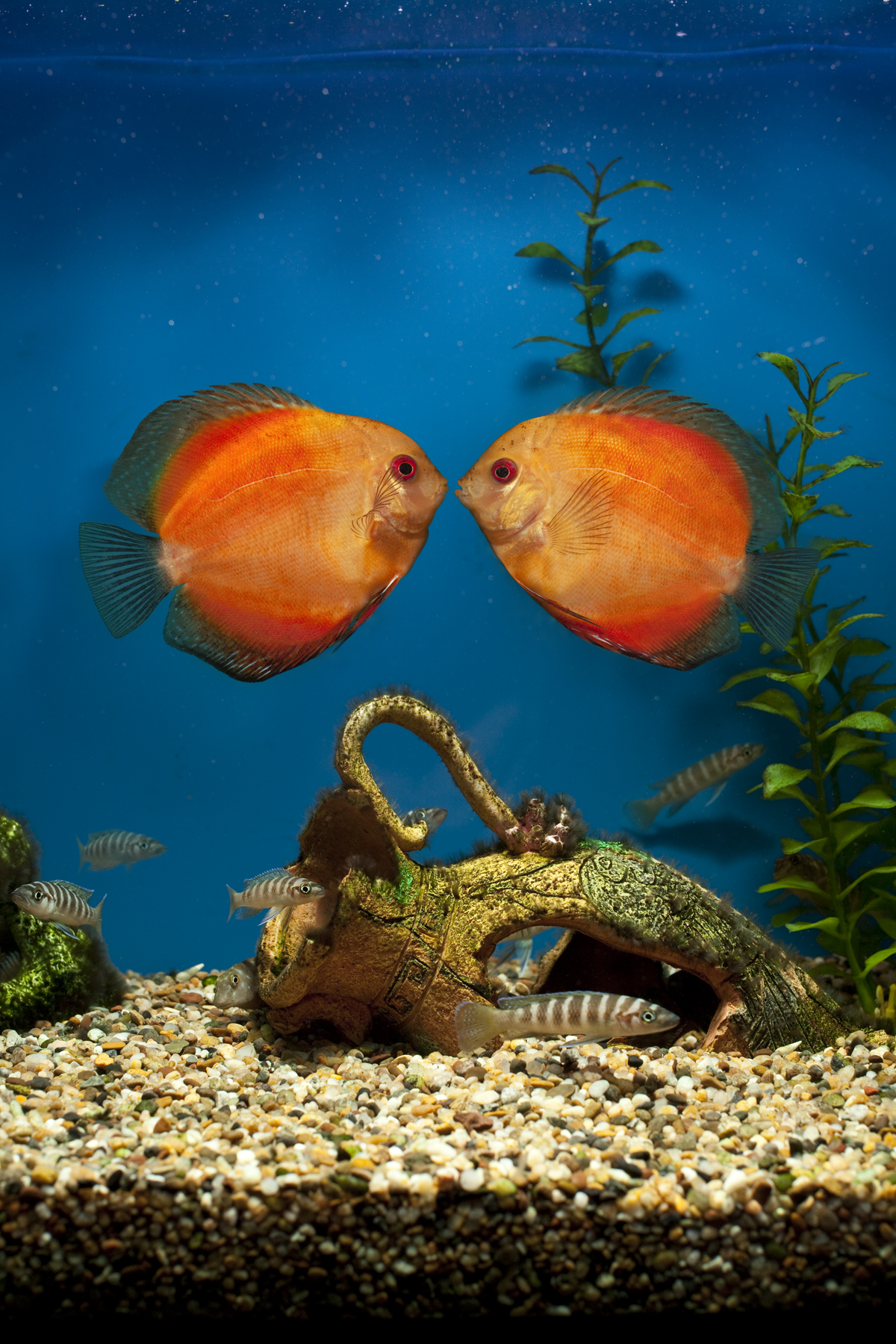Ray-Ban, Never Hide, Aviator Sightings, Fish Tank