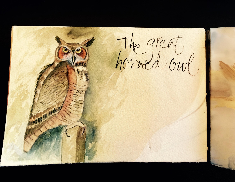 Great Horned Owl at Dawn, L Doctor Sketchbook