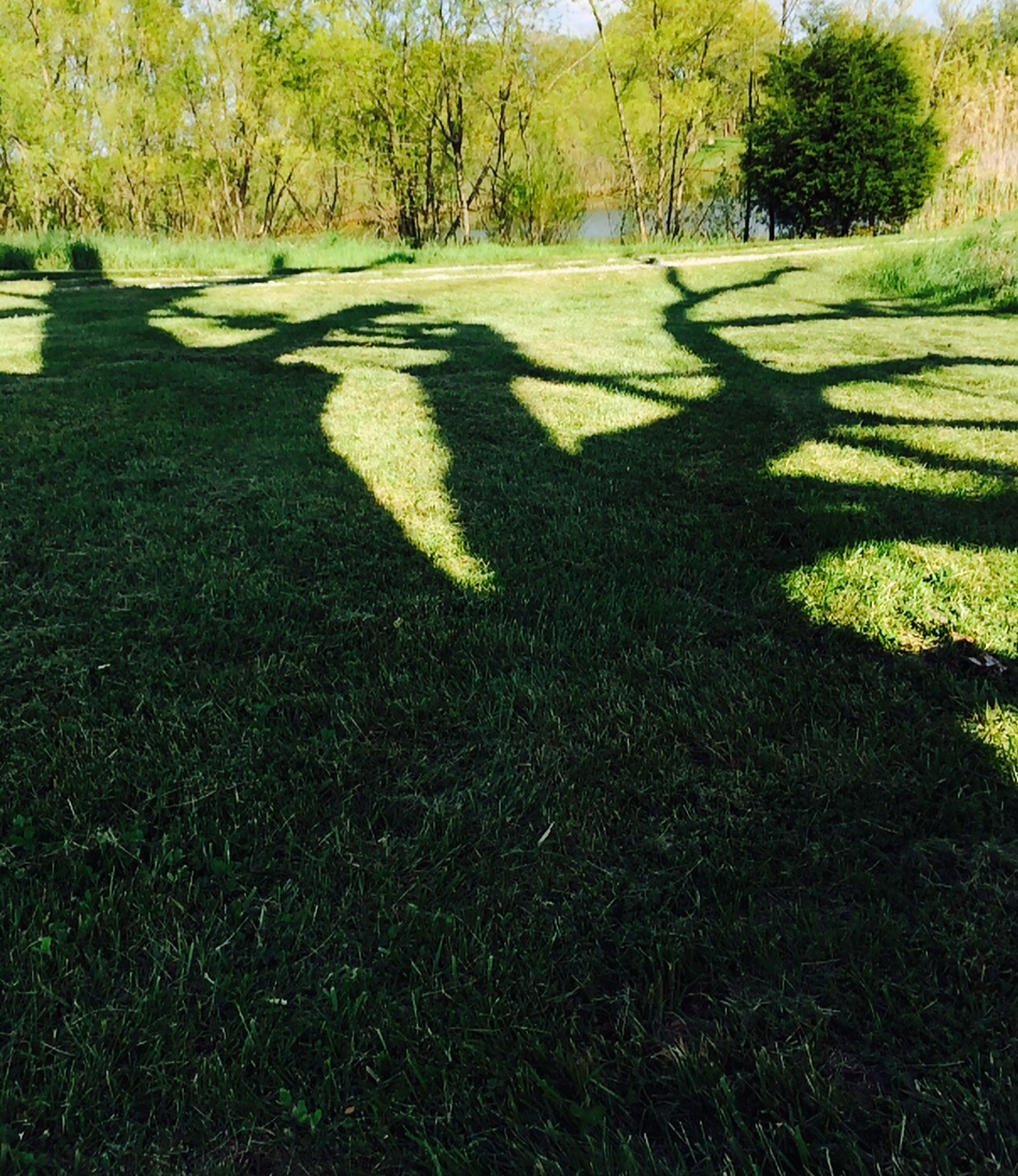 The tree's shadow and my shadow