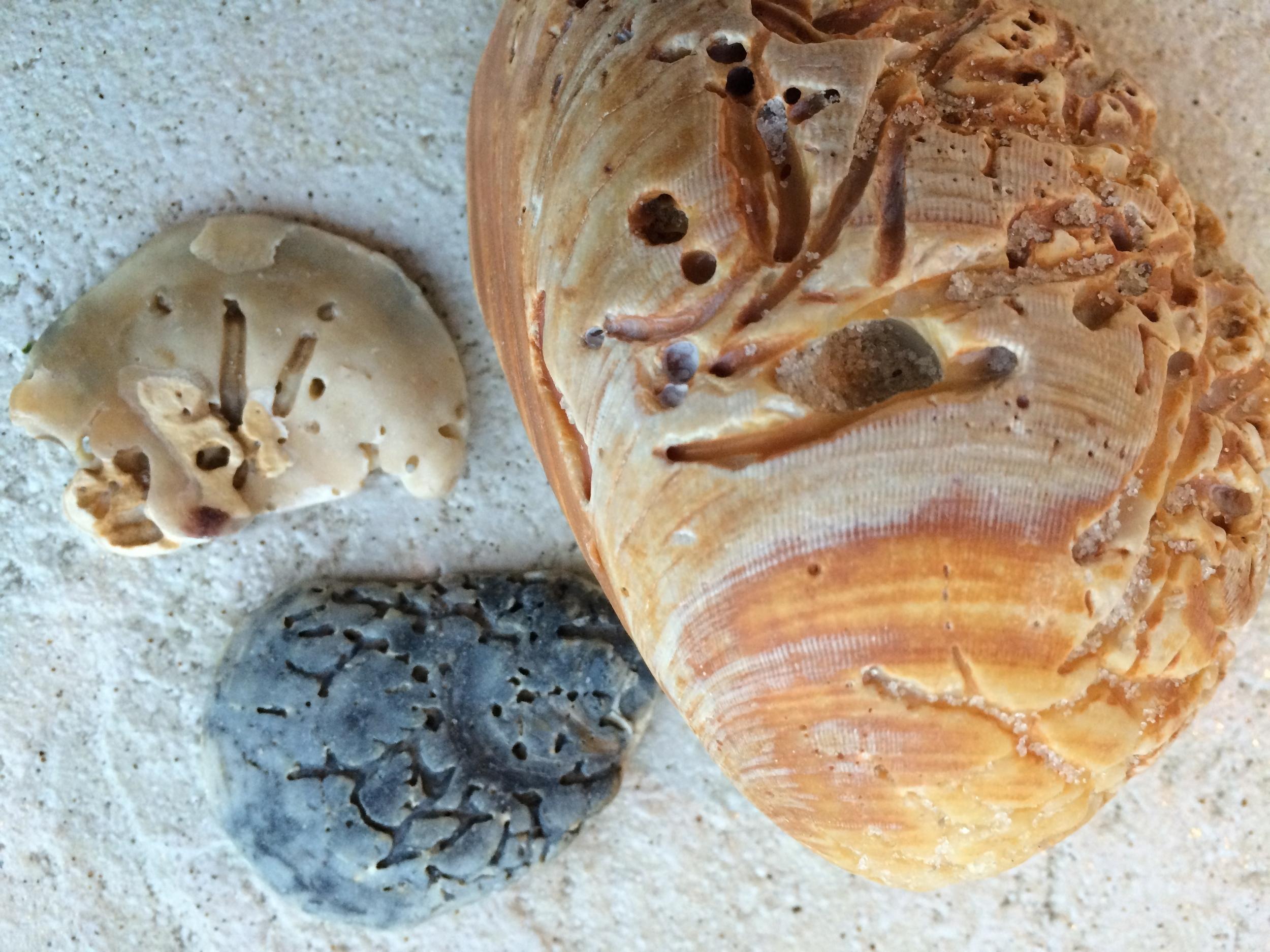 shell.1.JPG
