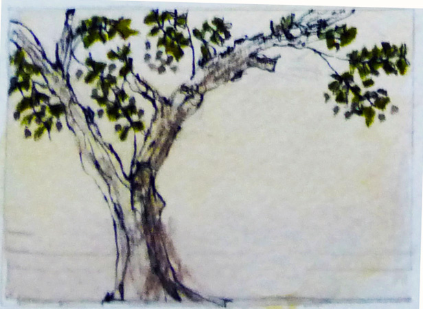 The olive tree grove at La Romita School of Art has been there for a few hundred years, and tended by the Capuchin Monks until the 1800's. –  L Doctor sketchbook
