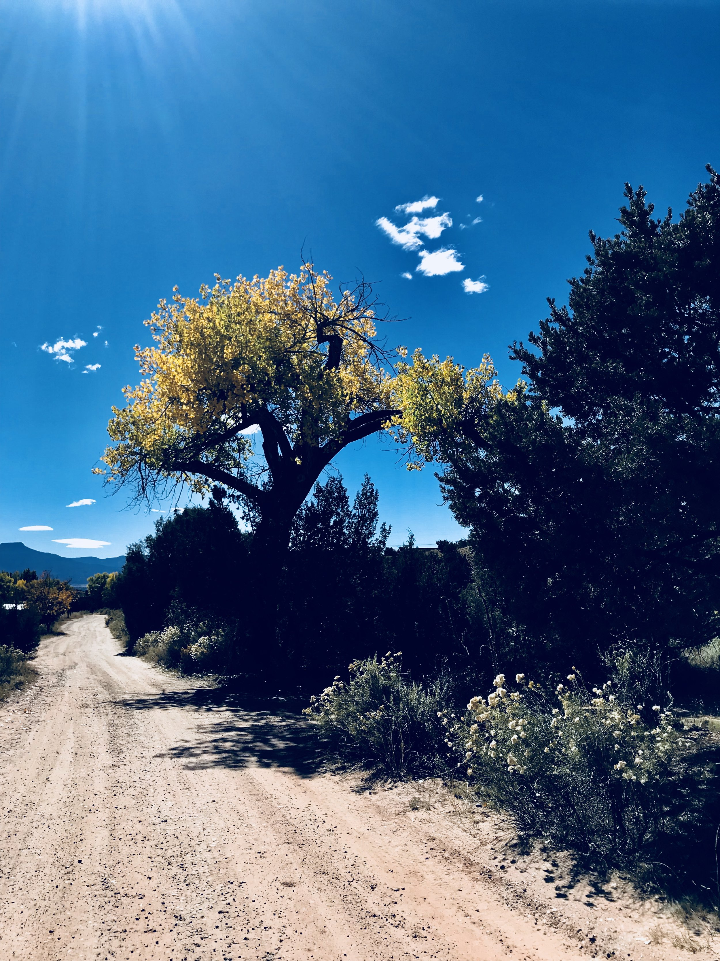 The road to our workshop space at Ghost Ranch