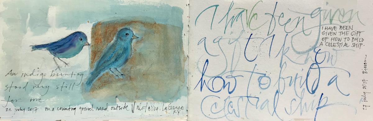 An indigo bunting stood still for me – L Doctor sketchbook