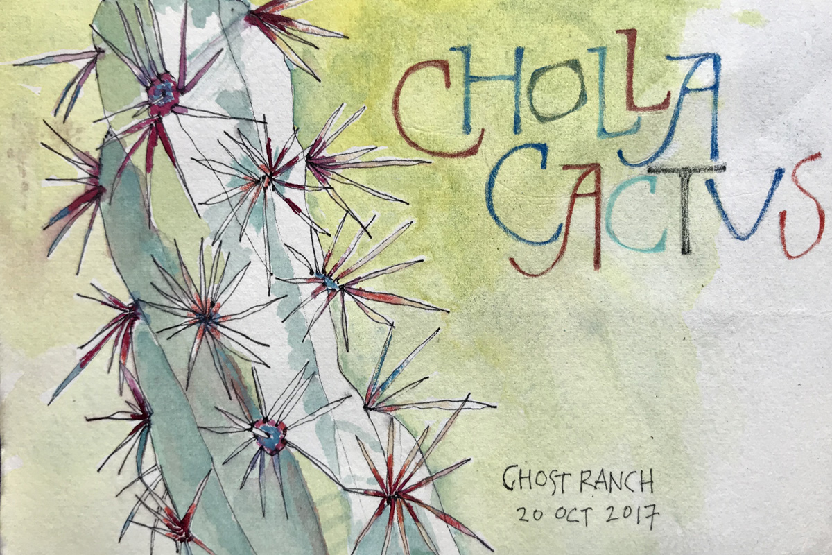 Cholla, Ghost Ranch, NM     –L Doctor Sketchbook