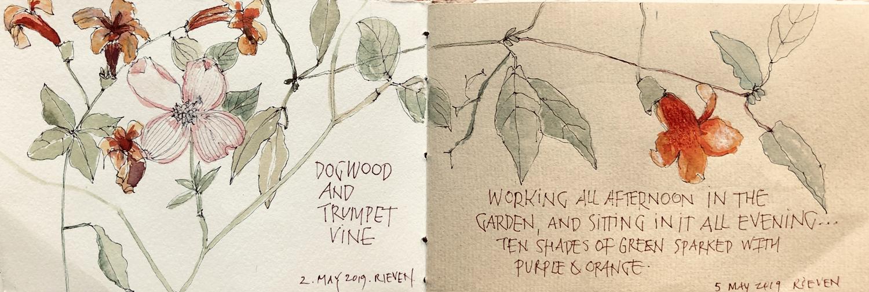 In the garden,  L Doctor Sketchbook