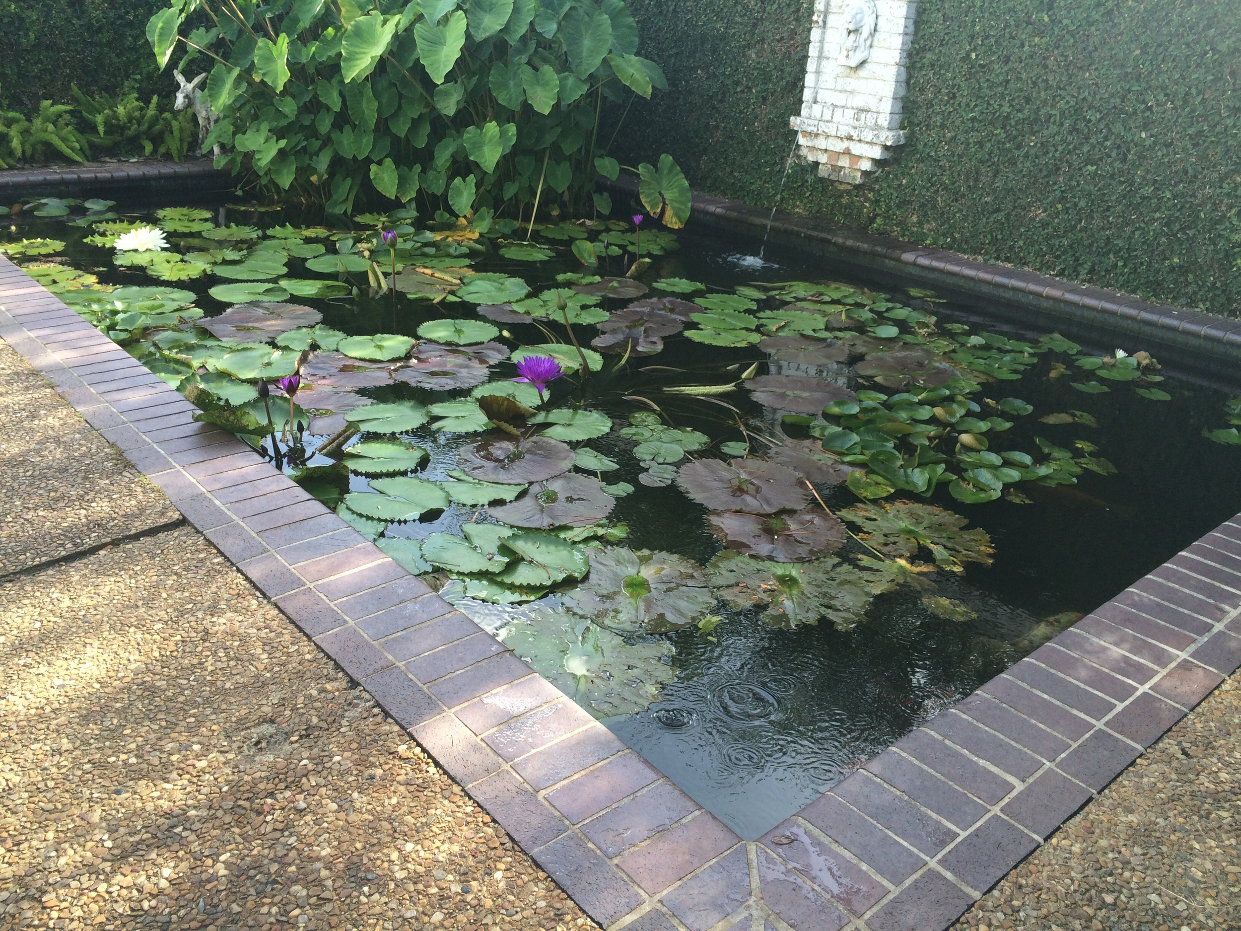 The before picture - the lilies are taking over.