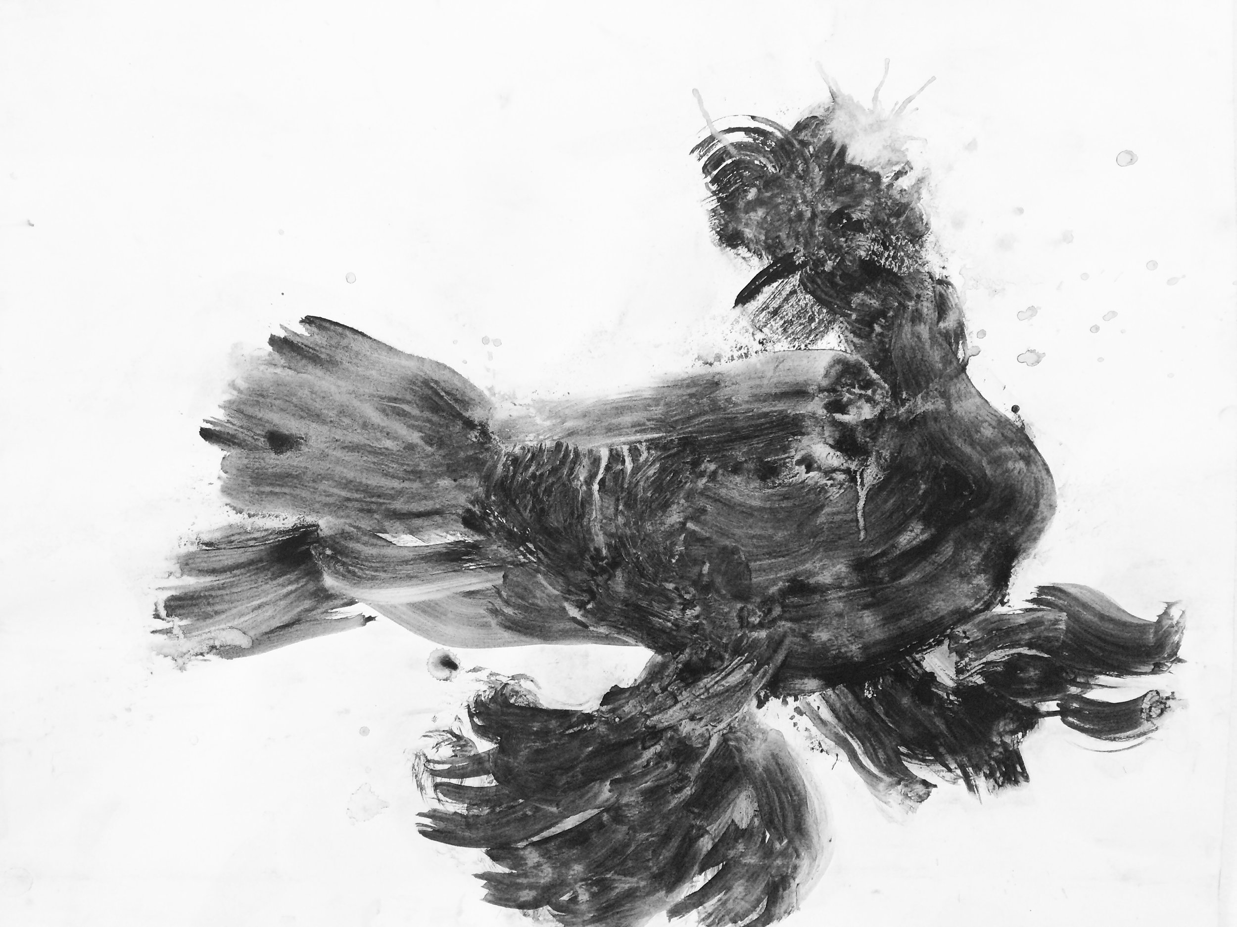 My charcoal drawing of pigeon.