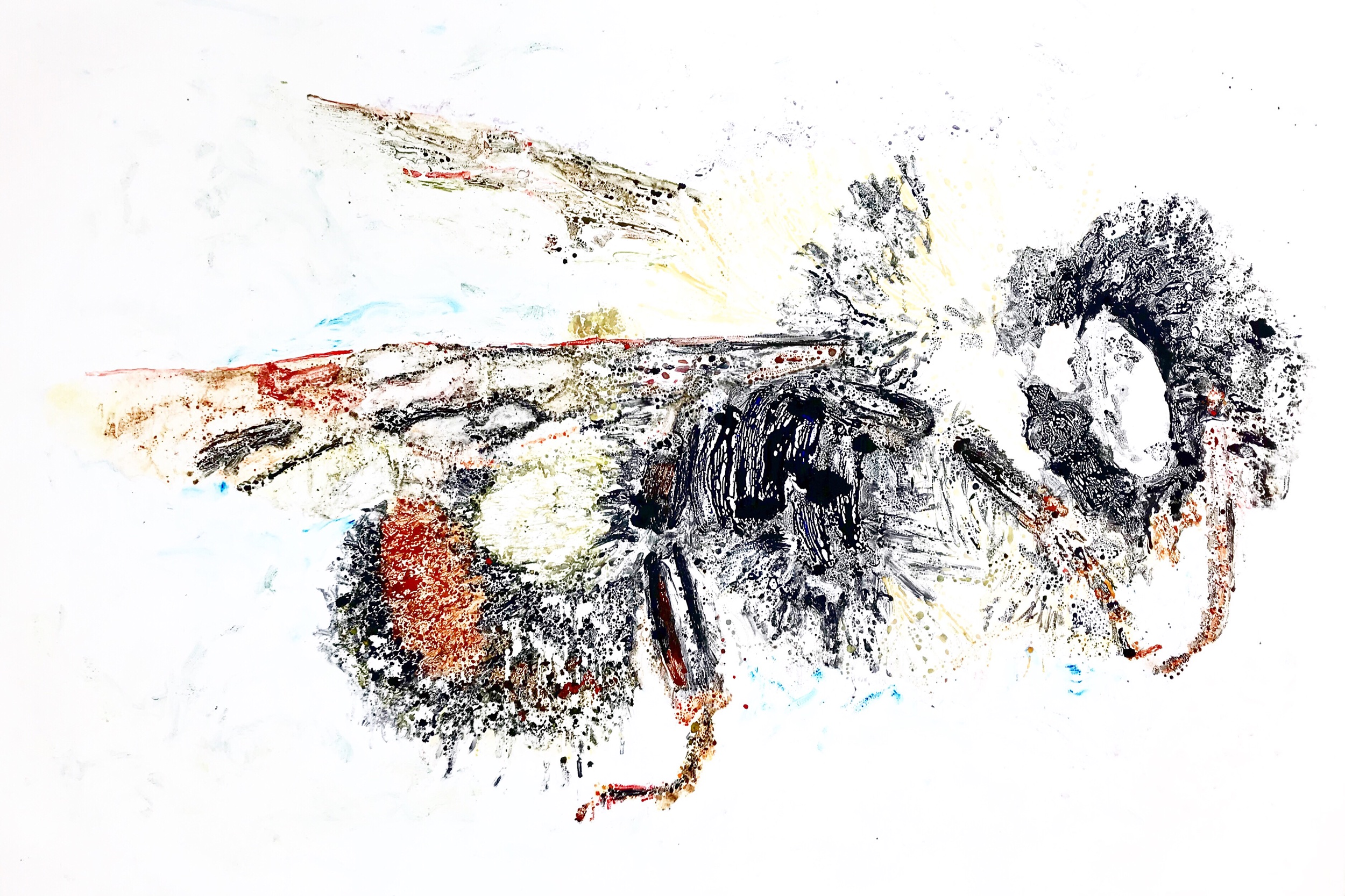"Bombus Affinis I  30"" X 44"" watercolor monotype"