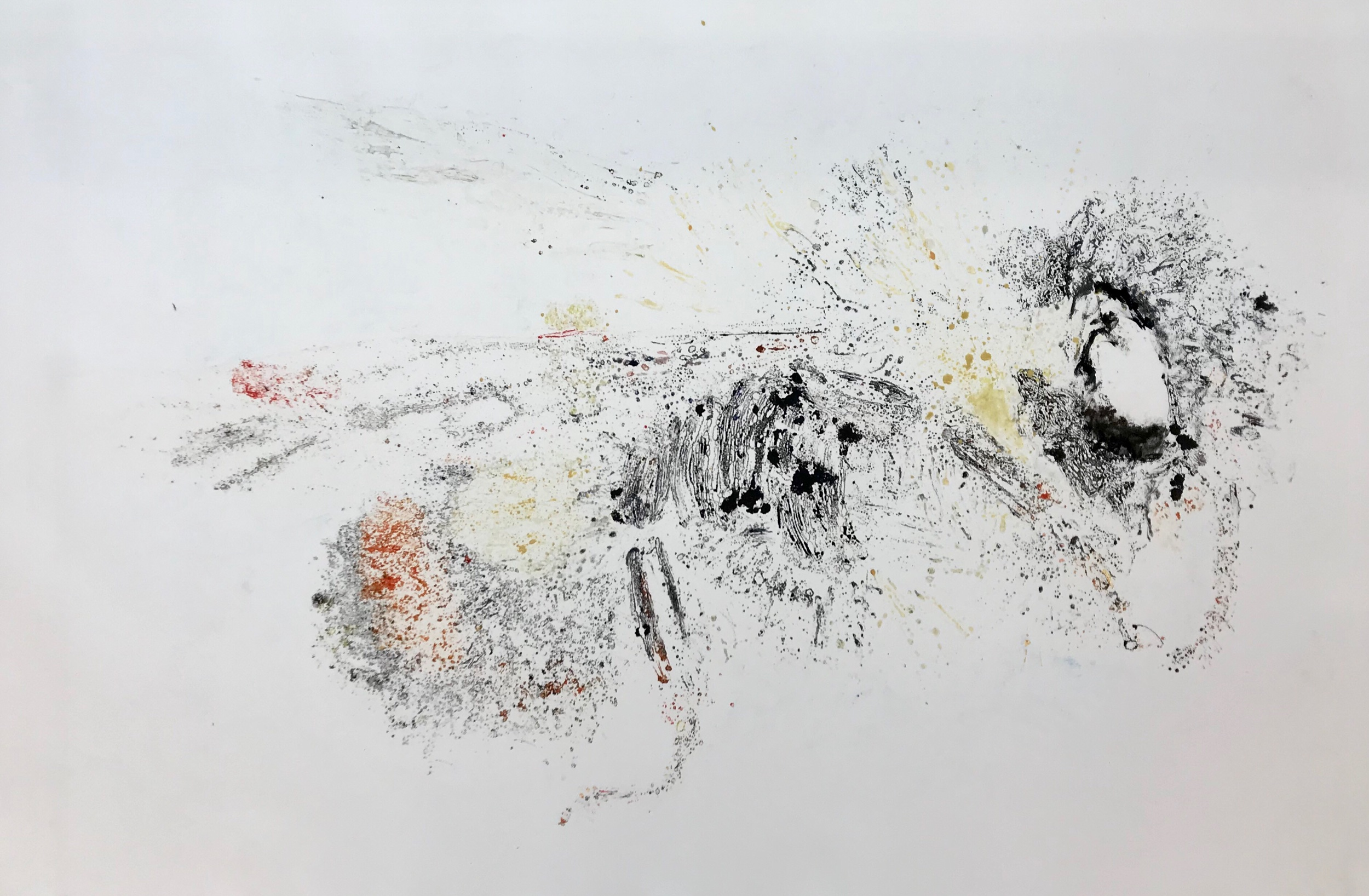 "Bombus Affinis I ghost  30"" X 44"" watercolor monotype"