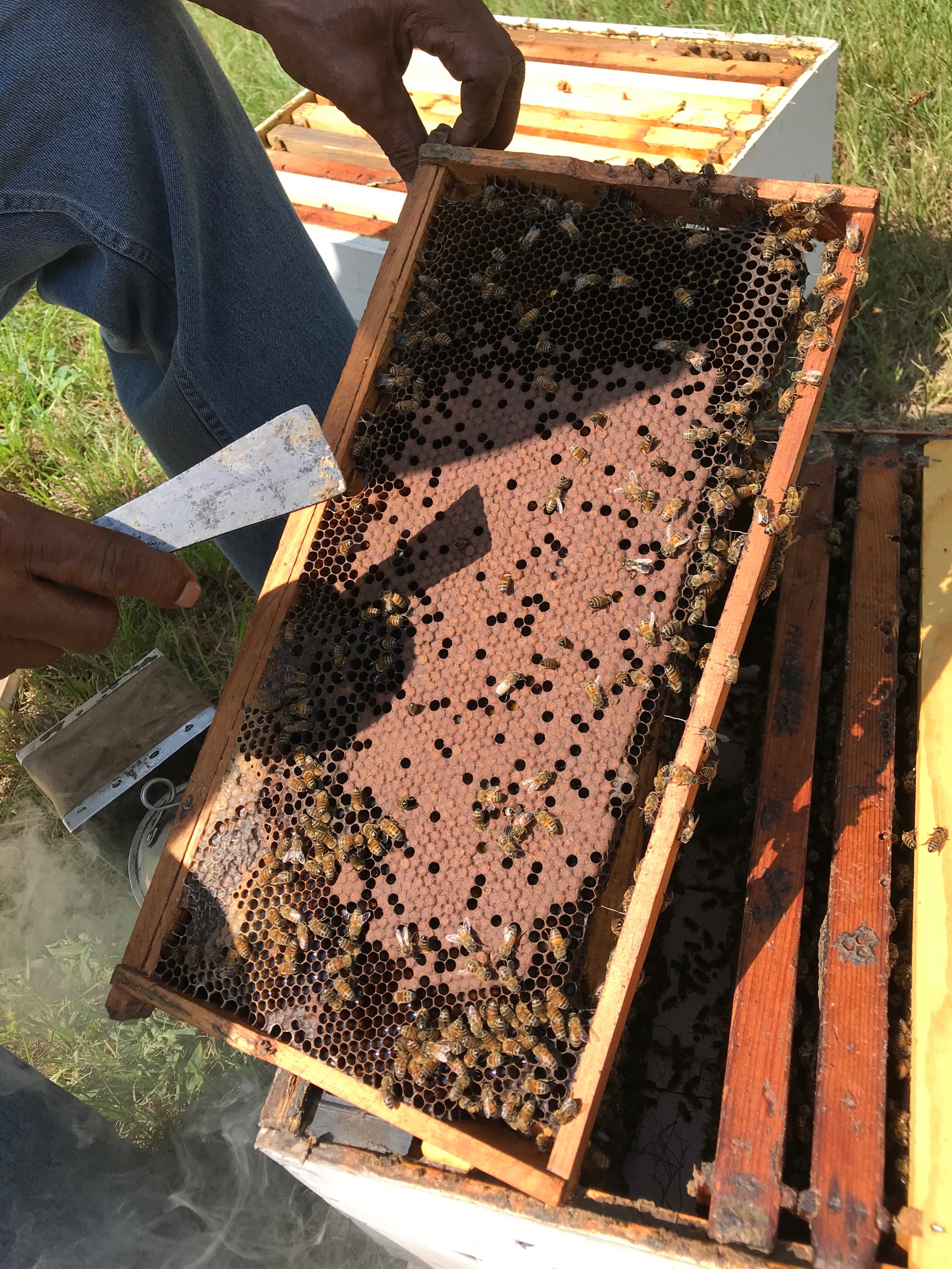 The bees carry on with their work as we inspect the first frame.