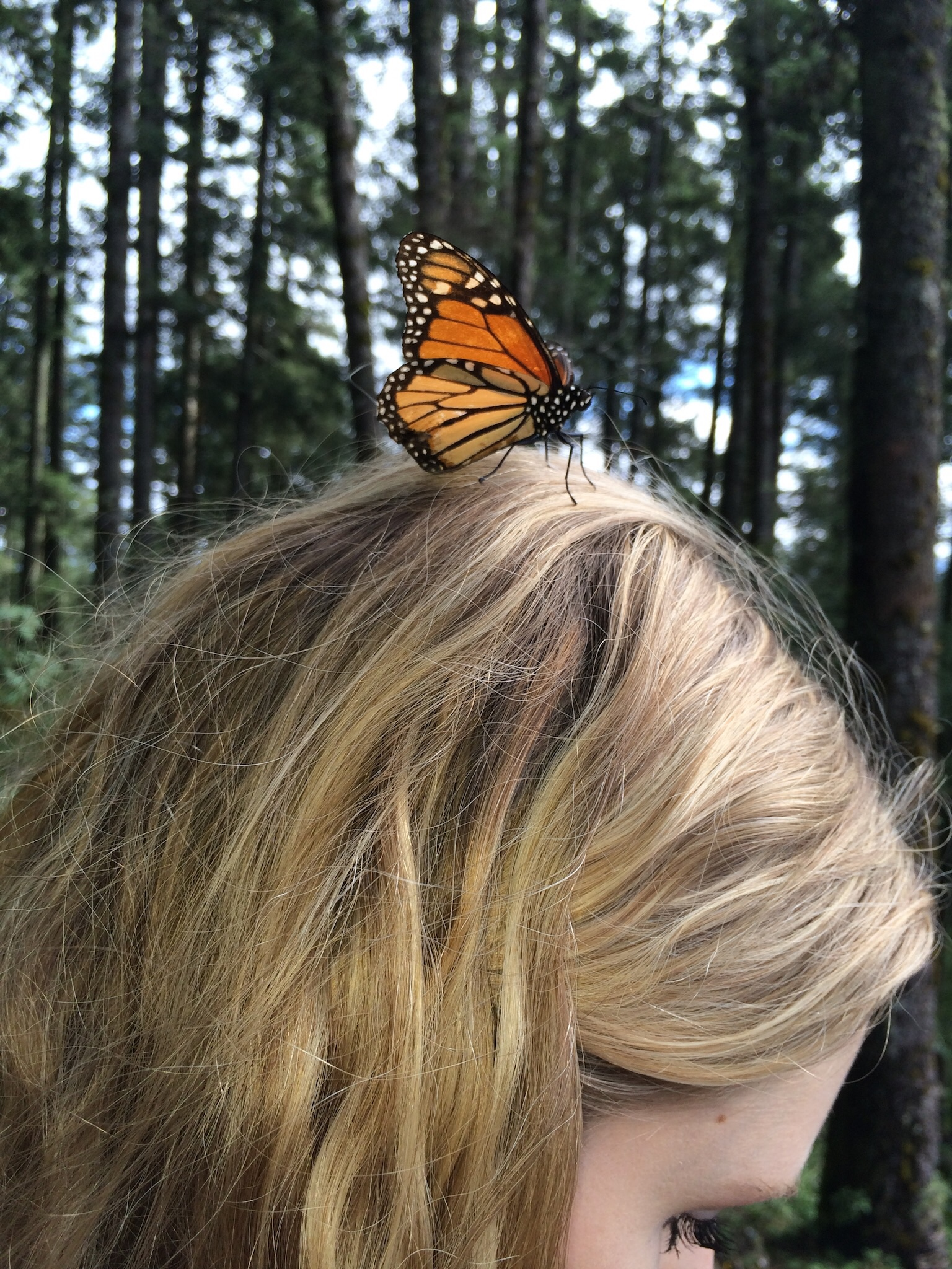 Sage provides fb a resting Place for a monarch