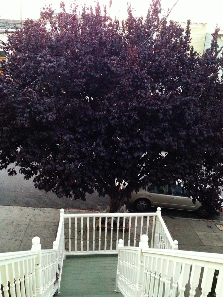 Plum Tree, 2013