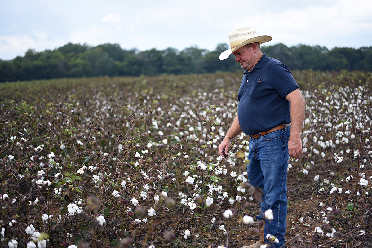 Mark Yeager pioneered Red Land Farms, based in Lawrence County, in the early 1980s. Since then, he's expanded the farm to include cotton, cattle, corn and now,  Red Land Cotton .