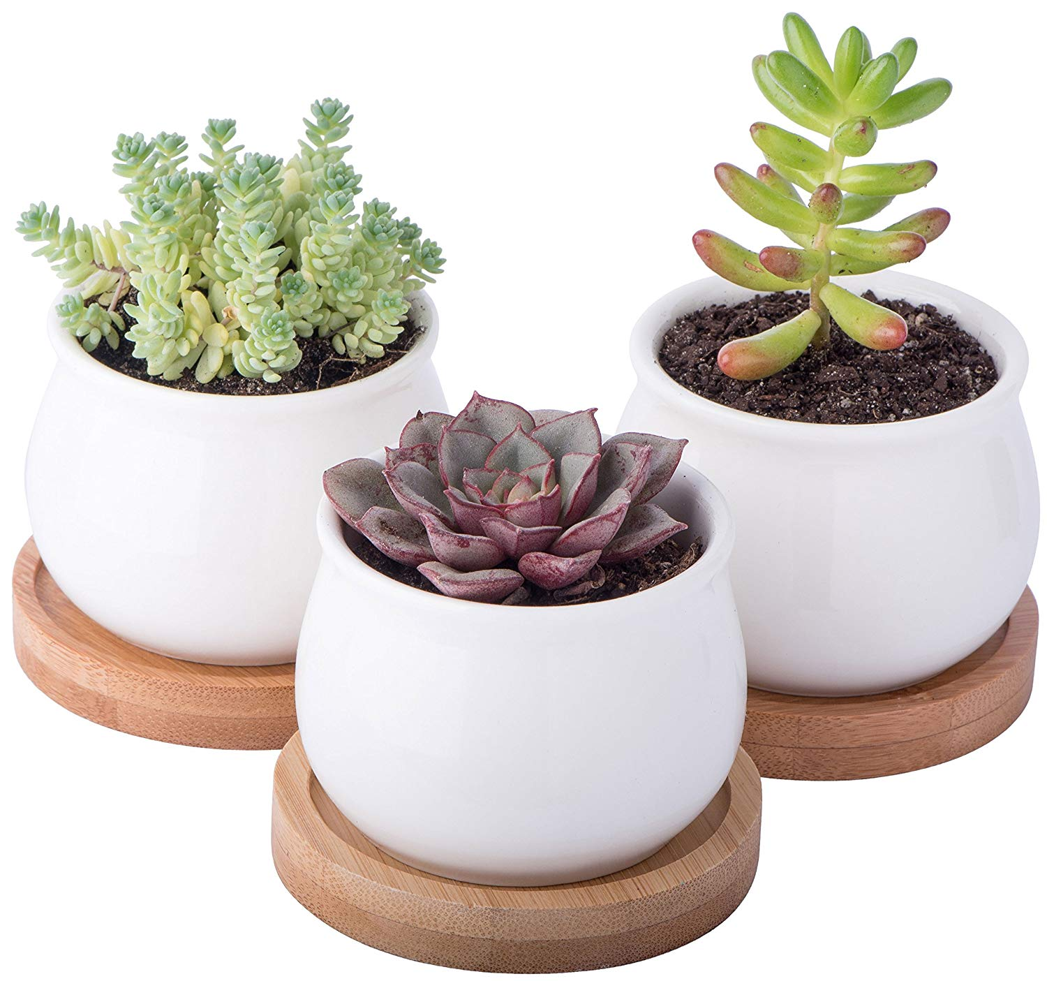Succulants in White Pots & Bamboo Base