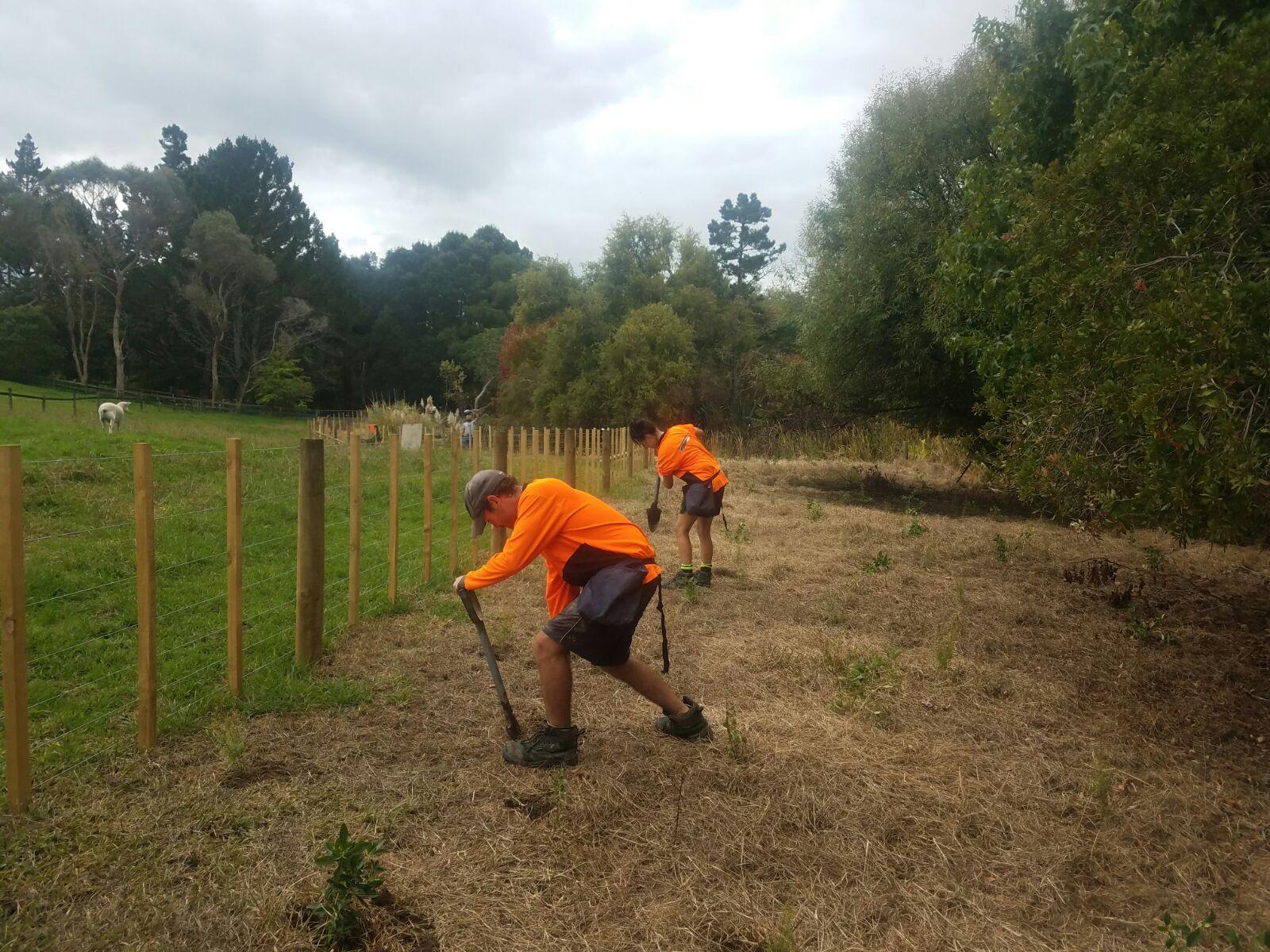 Riverhead Planting along the riparian margin.