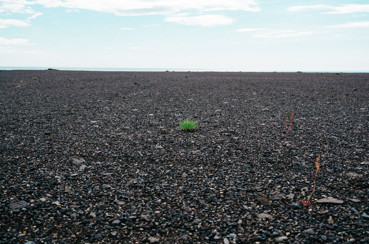 Tuft of grass growing on gravel beach, sky far away. Image by JayMantritumblrcreativecommons