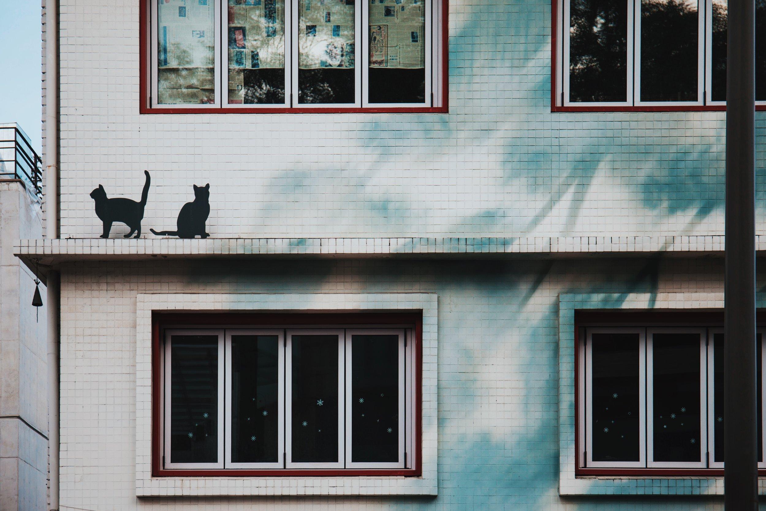 Photo by  zixuan Fu on  Unsplash