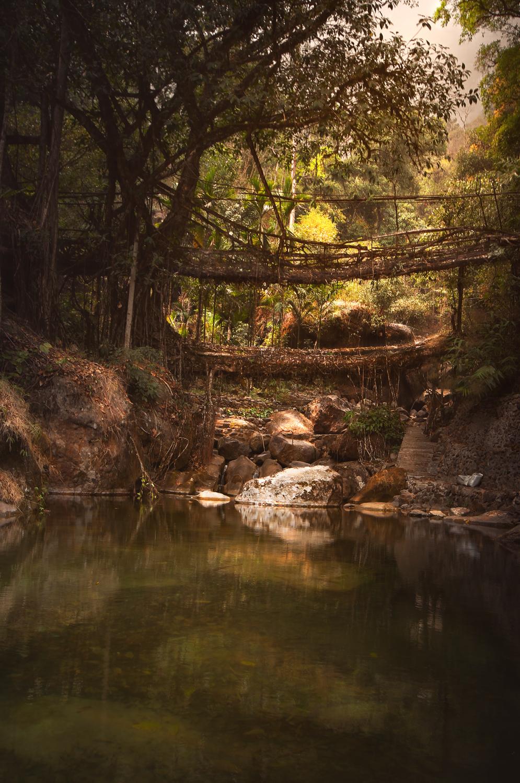 Rootbridgesafter.jpg