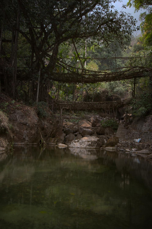 Rootbridgesbefore.jpg