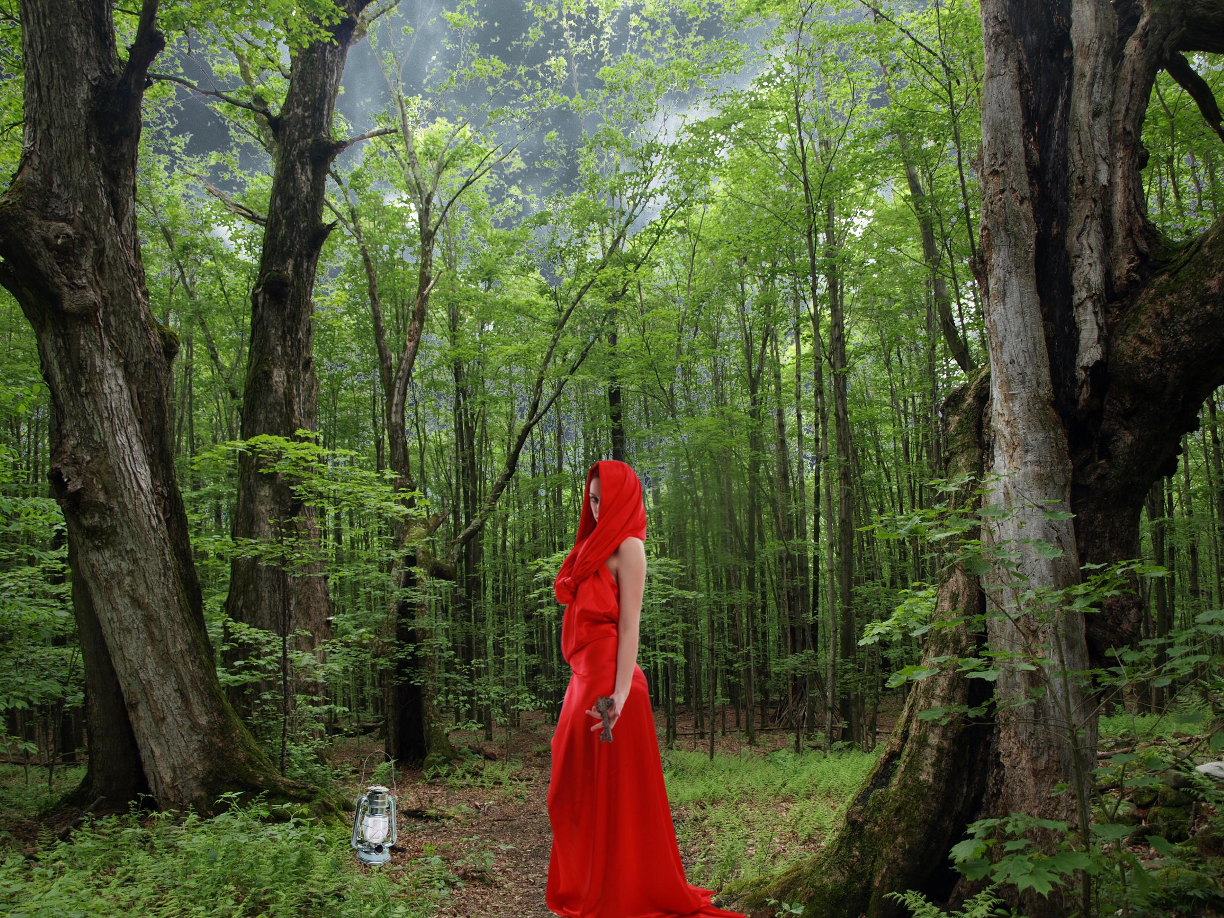 forest_before.jpg