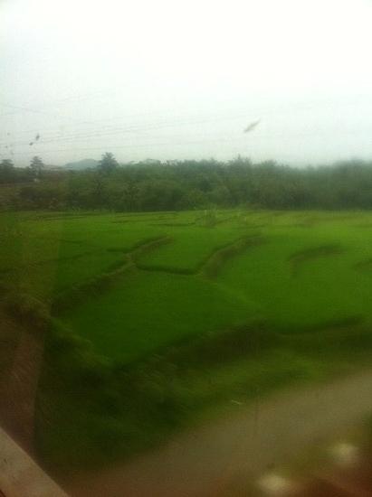 1.1300975558.green-fields.jpg
