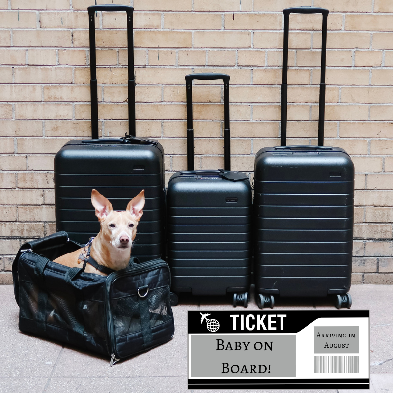 Bigger Carry-On  //  Kids' Carry-On  //  Carry-On  //  Dog Travel Carrier