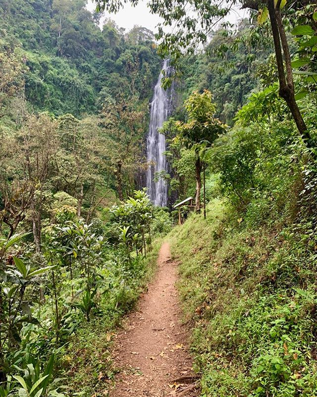 On the last day in Tanzania, we hiked to Materuni waterfall. #tanzania #materuni #waterfall