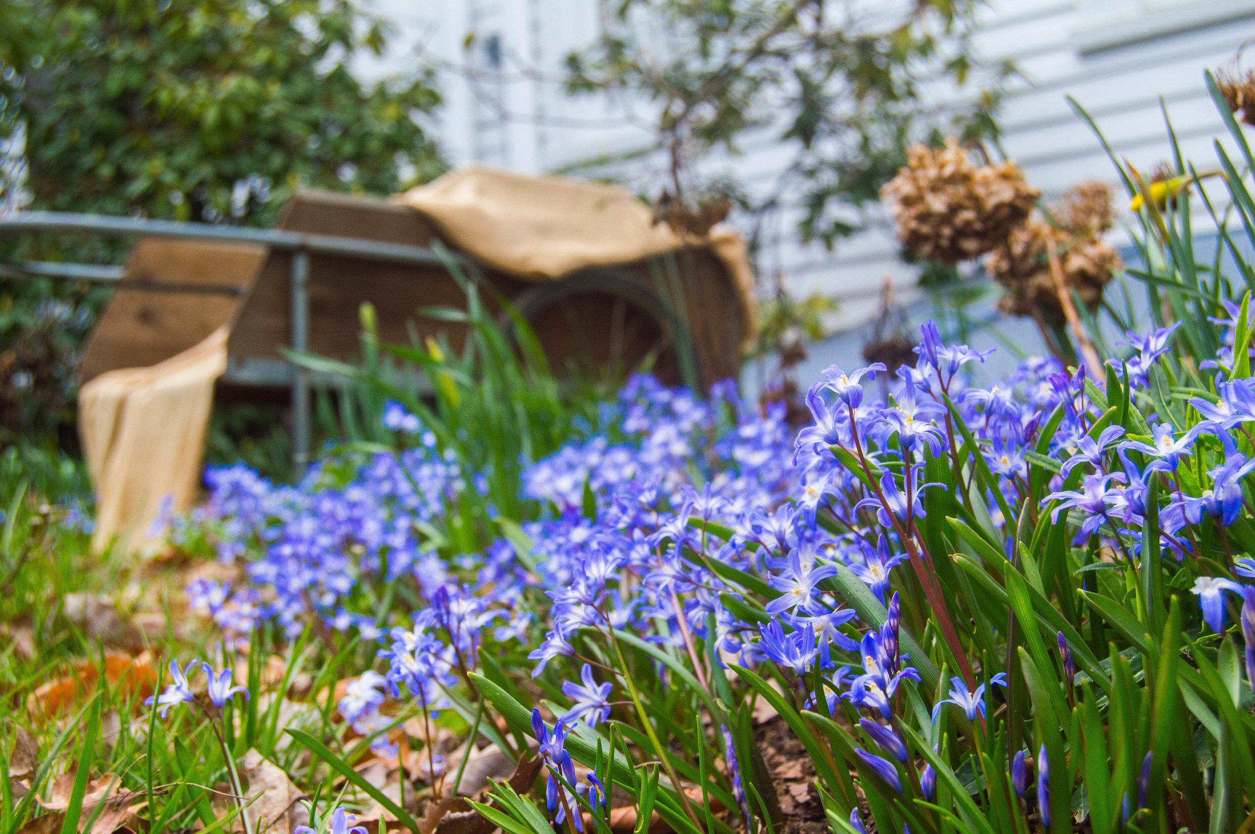 back lawn flowers.jpg