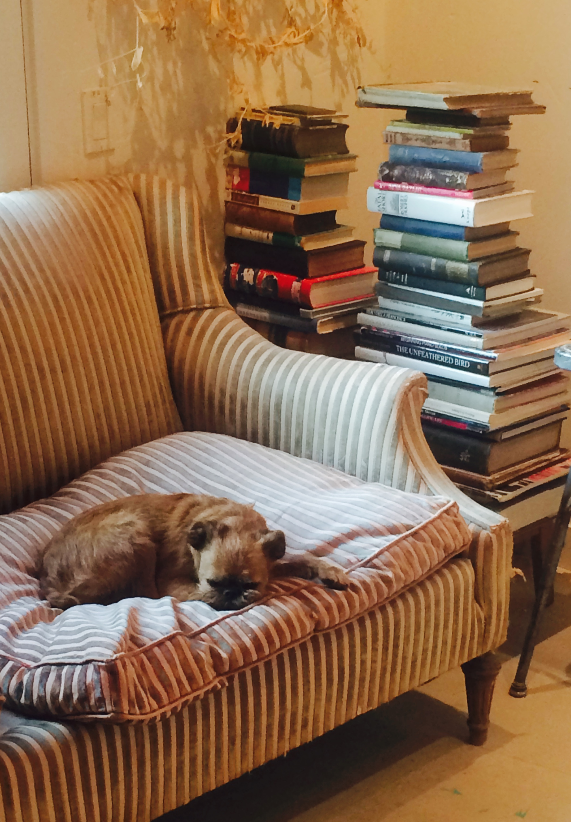 Every studio needs a mascot, an old, comfortable couch and piles of stacked books.