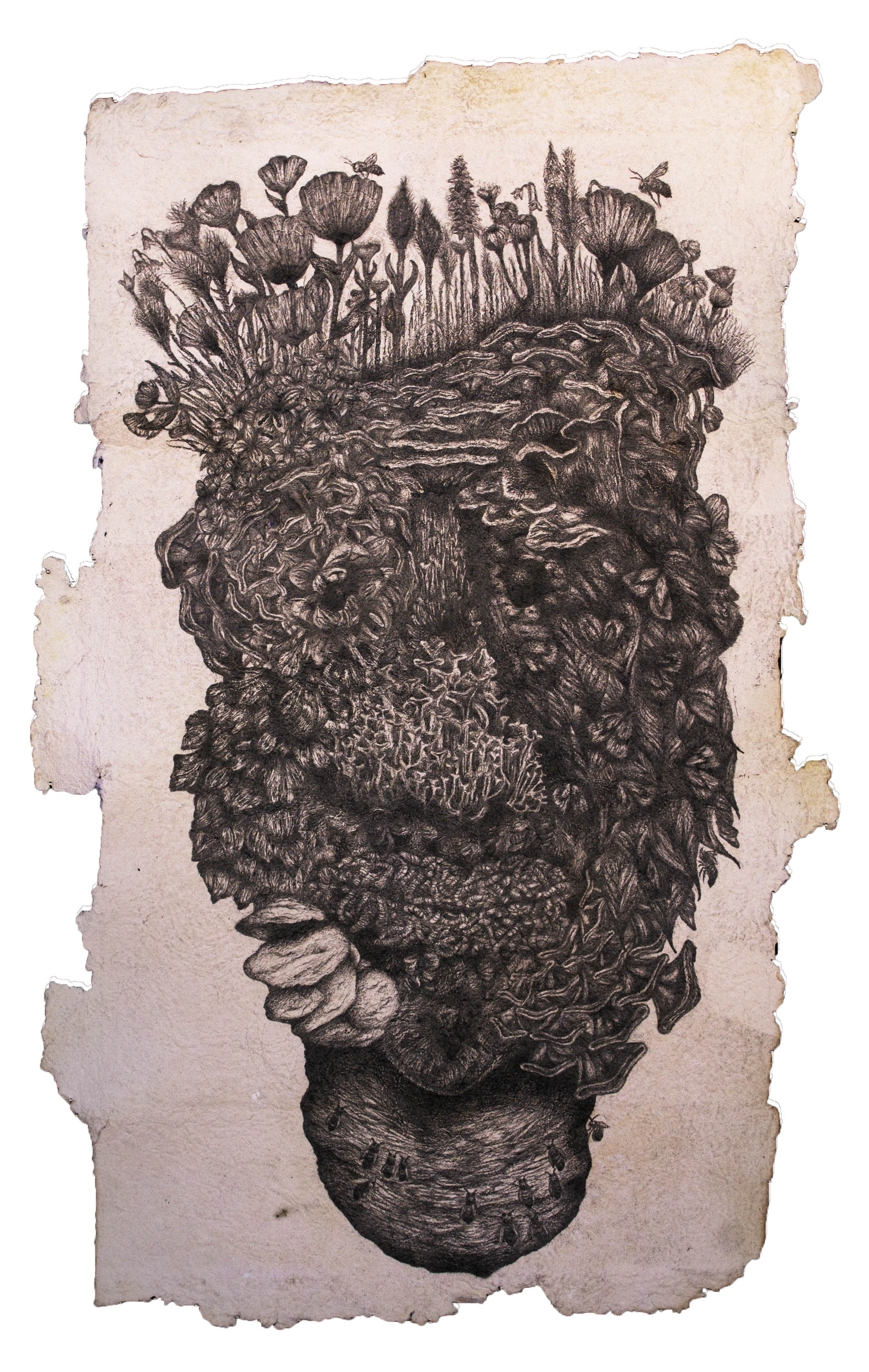 """Media: Graphite, hand-made paper  Size: 21"""" x 38""""  Completed in 2015, """"Evolved Generations"""" is the second piece in the """"Evolved Series"""". This image, like the others in this series depict a human face, that has been composed using textures and plant, and insect life. When making this drawing, I was thinking about our human connections to life, and how every part of our being has been made possible through our environments. I then began to question the human existence and what would our remains, or the shrines placed only for human consumption, would look after being left to nature's devices."""