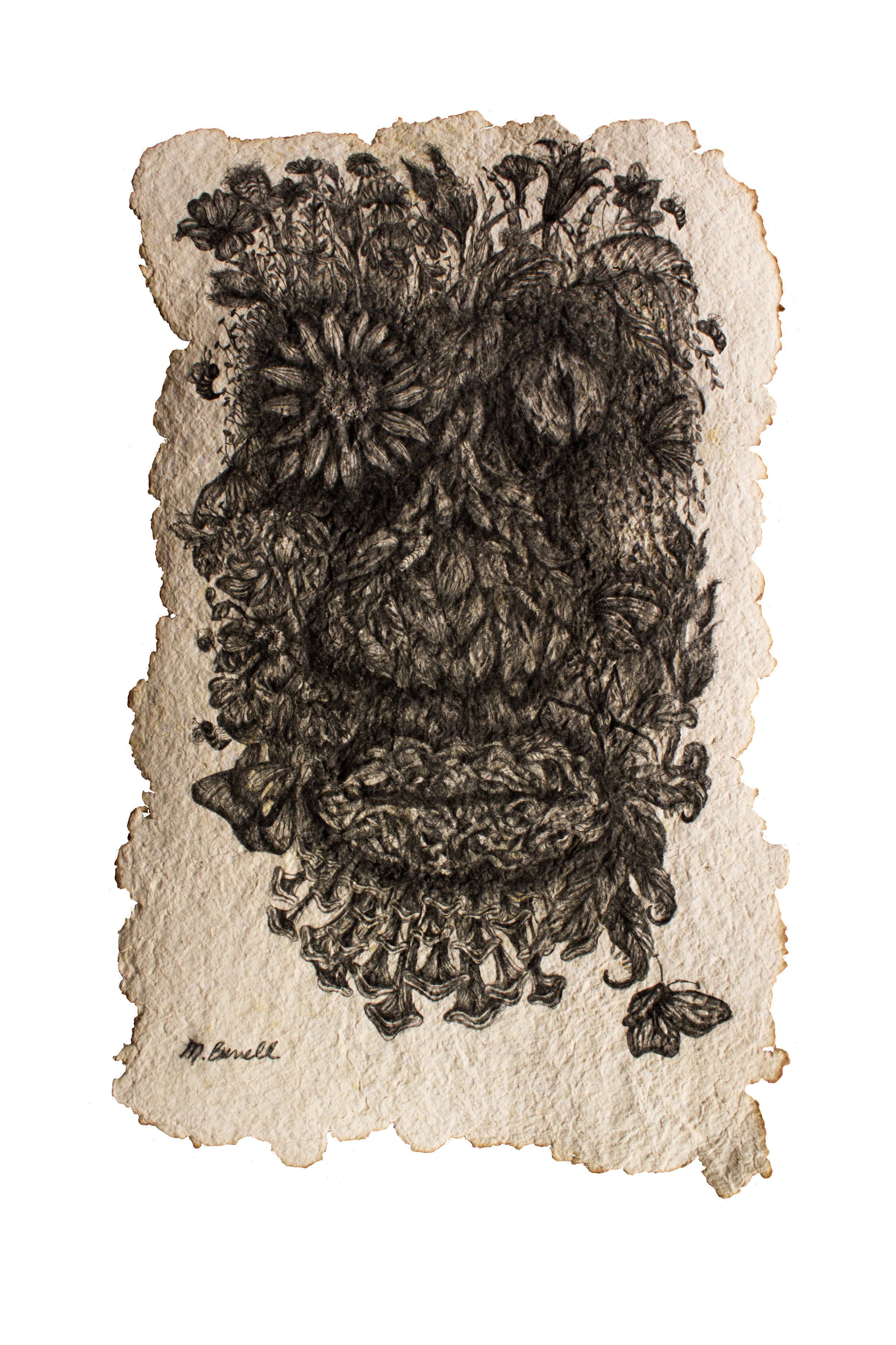 """Media: Graphite, hand-made paper  Size: 14"""" x 21""""  Completed in 2015, """"Evolved Connections"""" is the fifth piece in the """"Evolved Series"""". This image, like the others in this series depict a human face, that has been composed using textures and plant, and insect life. When making this drawing, I was thinking about our human connections to life, and how every part of our being has been made possible through our environments. I then began to question the human existence and what would our remains, or the shrines placed only for human consumption, would look after being left to nature's devices."""