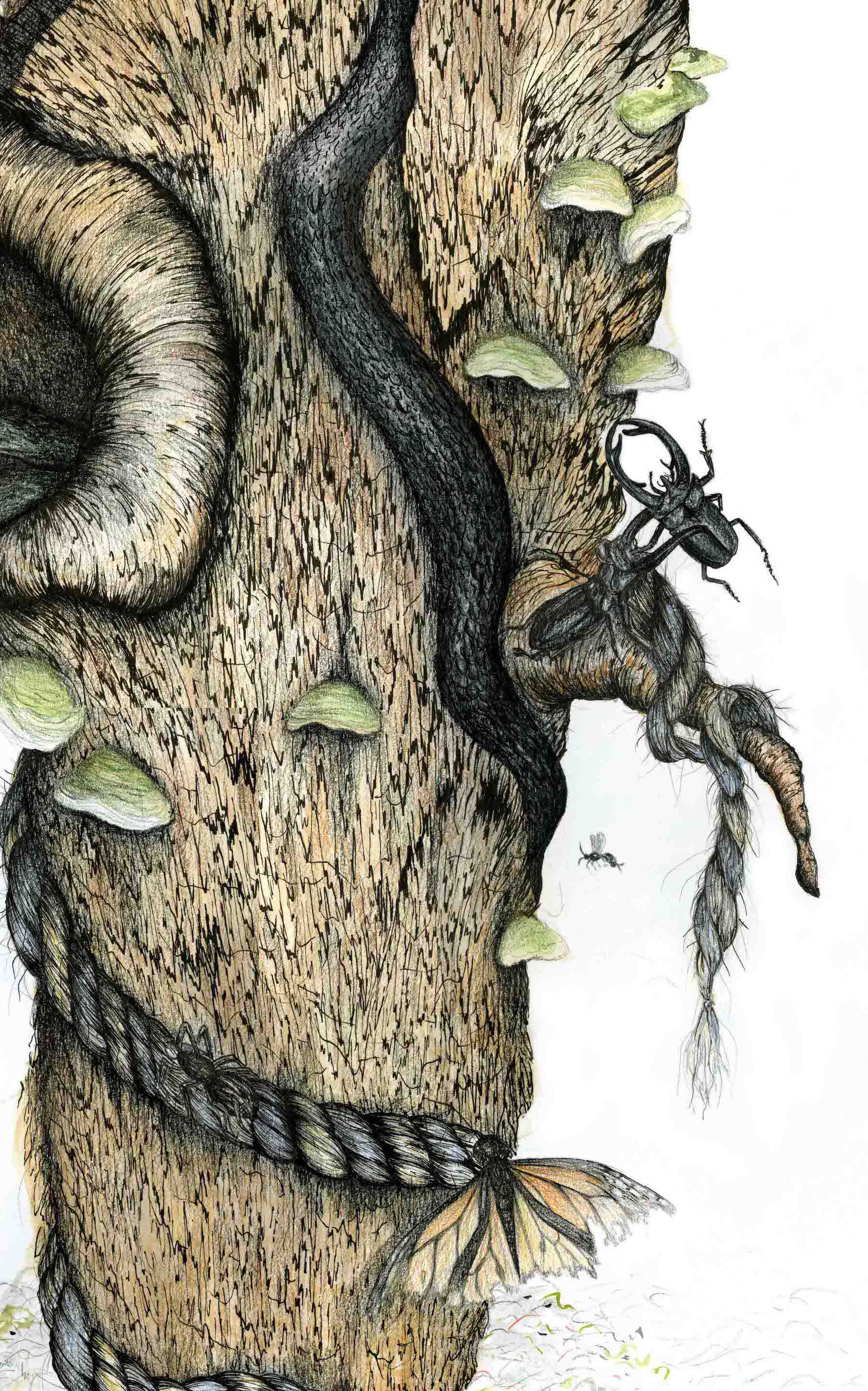 Balancing_Act_Crop_Beetles.jpg