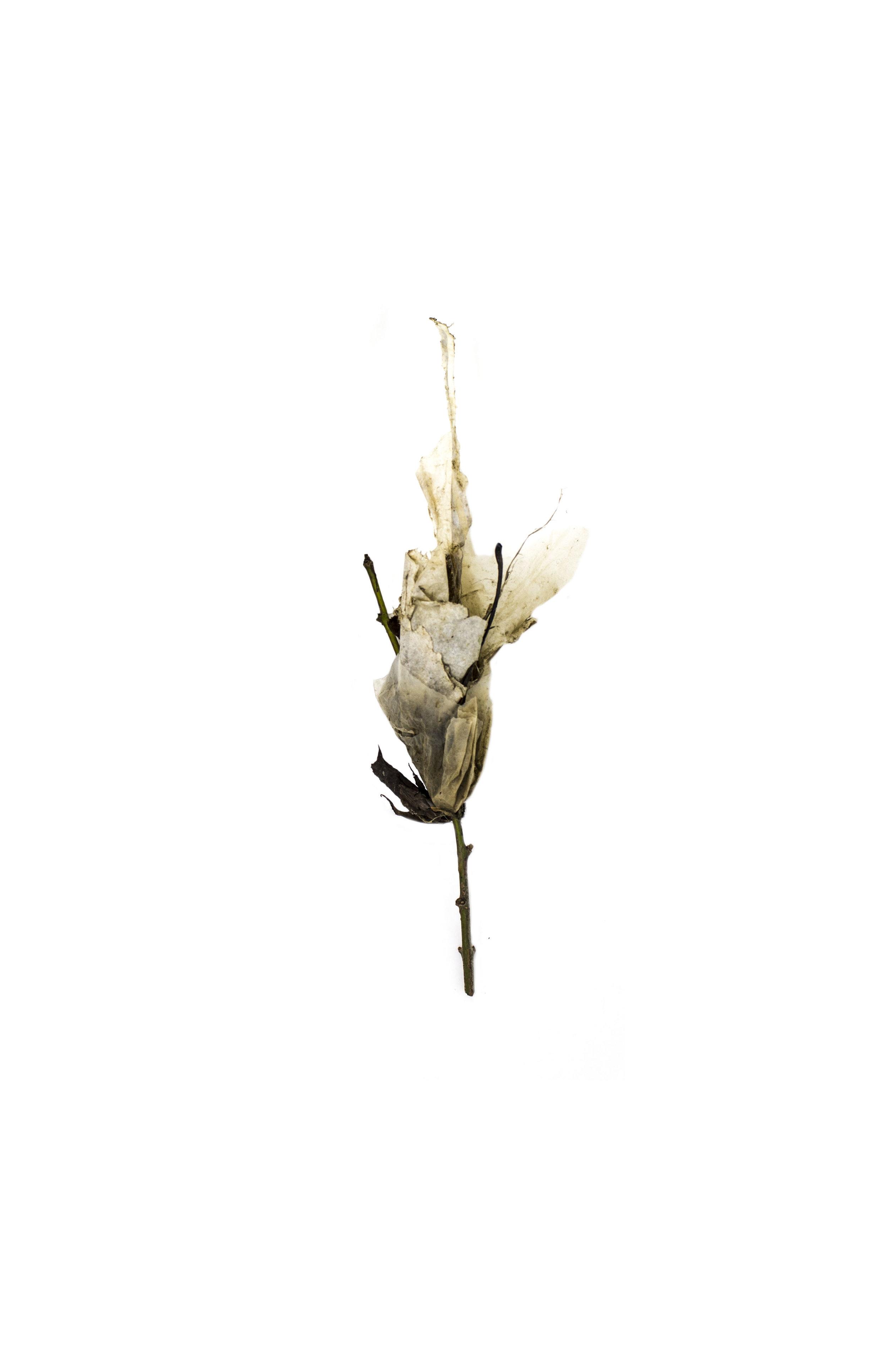Debris_Flower_16.jpg